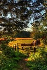Preview iPhone wallpaper Forest, trees, pine needles, grass, fields, bench, sun