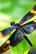 Preview iPhone wallpaper Insect, dragonfly, wings