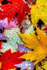 Preview iPhone wallpaper Leaves, autumn, water drops, yellow red purple
