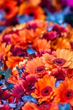 Preview iPhone wallpaper Many orange flowers
