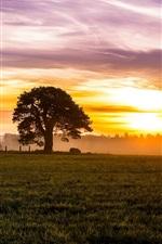 Preview iPhone wallpaper Morning, dawn, fog, sunrise, sky, clouds, fields, meadow, trees