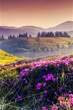 Preview iPhone wallpaper Nature spring, hills, flowers, trees, sun