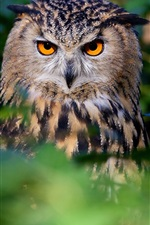Preview iPhone wallpaper Owl, bird, face, eyes, forest