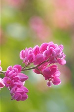 Pink flowers, blur background, spring