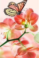Preview iPhone wallpaper Red flowers, orchids, butterflies