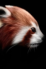 Preview iPhone wallpaper Red panda, raccoon, black background