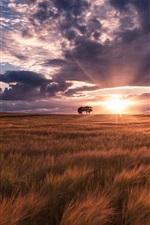 Preview iPhone wallpaper Summer, fields, sunset, nature landscape