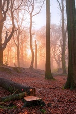 Preview iPhone wallpaper Sunrise in the forest, trees, fog, morning