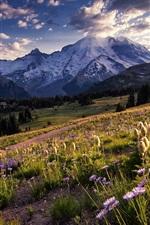 미리보기 iPhone 배경 화면 미국, 워싱턴, 국립 공원, 산, 나무, 초원, 꽃, 햇빛