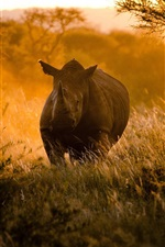 Preview iPhone wallpaper African, sunset, sunlight, rhinoceros