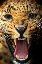 Preview iPhone wallpaper Animal close-up, leopard, teeth, eyes, mustache, black background