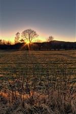 Autumn, dry grass, fields, trees, sunset, hills