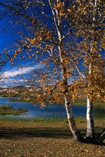 Preview iPhone wallpaper Autumn, river, trees, birch, mountain, sky, clouds