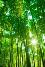 Preview iPhone wallpaper Bamboo forest, green nature landscape