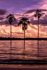 Preview iPhone wallpaper Beach, bay, palm trees, sunset, purple