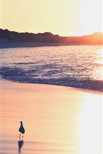 Preview iPhone wallpaper Beach, sea, sand, surf, seagulls, sunrise