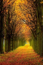 Preview iPhone wallpaper Beautiful nature scenery, forest, trees, autumn, path