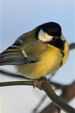 Bird close-up, twigs, bokeh