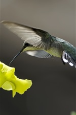 Preview iPhone wallpaper Birds close-up, hummingbird, yellow flowers