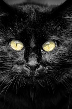 Preview iPhone wallpaper Black cat, yellow eyes, black background