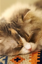 Preview iPhone wallpaper Fluffy cat sleeping