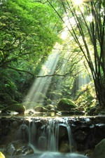 Preview iPhone wallpaper Forest, river, waterfall, rocks, moss, sun rays