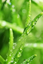 iPhone обои Трава макро, роса, капли воды, зеленый