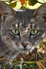 Preview iPhone wallpaper Green eyes cat face, trees, sunlight