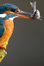 Preview iPhone wallpaper Kingfisher catching a fish