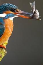Vorschau des iPhone Hintergrundbilder Kingfisher einen Fisch fangen