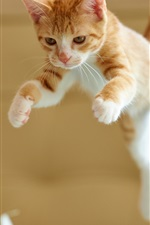 Preview iPhone wallpaper Kitten jumping
