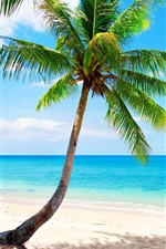 Preview iPhone wallpaper Lonely palm tree, tropical, beach, coast, sea