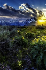 Preview iPhone wallpaper Rocky Mountains, Grand Teton National Park, flowers, dawn, sunrise