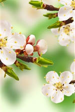 Preview iPhone wallpaper Spring apple tree, branch, white flowers, leaves