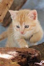 Preview iPhone wallpaper Tree stump, kitten