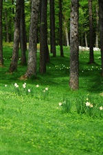 Preview iPhone wallpaper Trees, flowers, meadow
