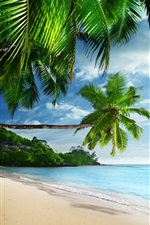 Preview iPhone wallpaper Tropical landscape, palm trees, sunshine, beach, coast, sea, sky, blue
