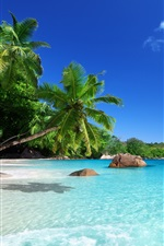 Preview iPhone wallpaper Tropical paradise, sunshine, beach, coast, sea, palm trees