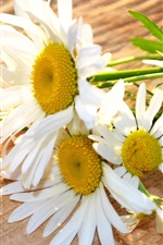 Preview iPhone wallpaper White flowers, daisies, wood board