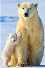 Preview iPhone wallpaper White polar bears, bear mother with cubs, winter, snow