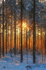 Preview iPhone wallpaper Winter forest, sunset, snow, trees