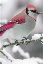 Preview iPhone wallpaper Winter, snow, red feather bird