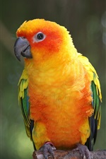 Preview iPhone wallpaper Yellow feathers bird, parrot, macaw