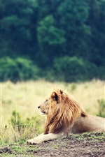 Preview iPhone wallpaper Animal close-up, lion, mane, grass