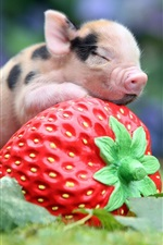 Preview iPhone wallpaper Animals, little pig, big strawberry