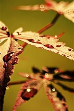 Preview iPhone wallpaper Autumn leaves close-up, dew, blur background