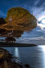 Preview iPhone wallpaper Bay, coast, tree, night, stars, moonlight