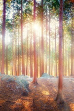 Preview iPhone wallpaper Beautiful nature, forest, trees, sun rays, shadow