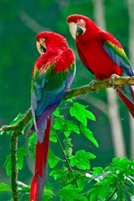 Preview iPhone wallpaper Beautiful parrot, colorful feathers, nature, green leaves
