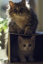 Preview iPhone wallpaper Cat with kitten, house, box